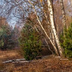 Понад лісом осіннім