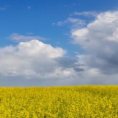 Жовто-блакитна панорамка