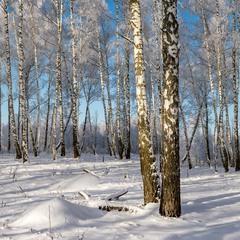Гарно взимку в лісі