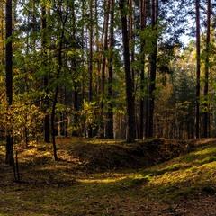 Блукаючи осіннім лісом