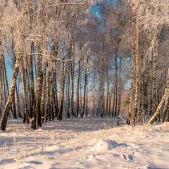 Морозно ранком в лісі