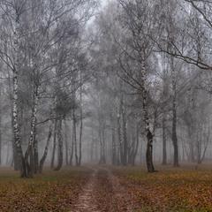 Про березовий гай та туман...
