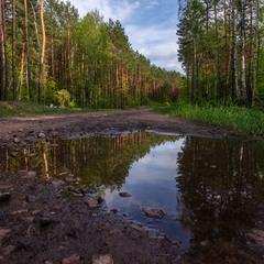 Лісними шляхами