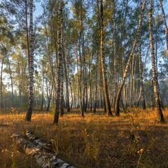 Ранок в осінньому лісі