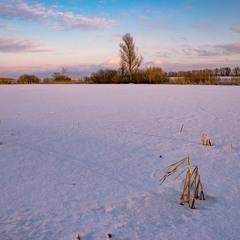 Зимова