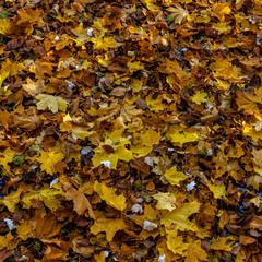 Осінній килим