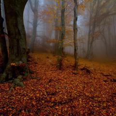 Золотая осень Демерджи