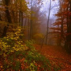 Осень многоцветная
