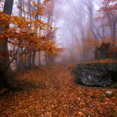 Там лес и дол видений полны II