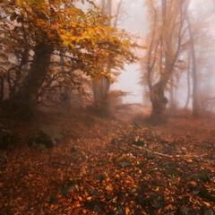 Осенняя буковая