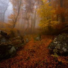 И был хаос...Насквозь пропитанный туманом...