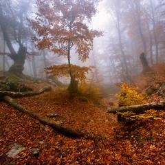 Золотая осень Демерджи II