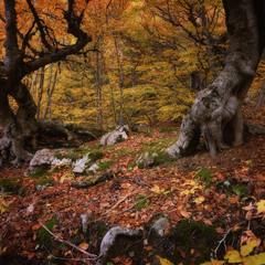 Ранняя осень Демерджи
