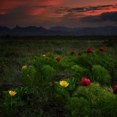 Желто-красная весна
