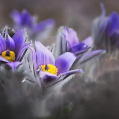 Весна наступает...