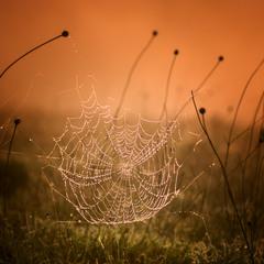 Охота в утреннем тумане