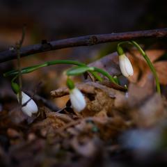 Весна скоро