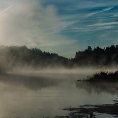 Тетерів в тумані