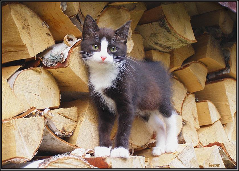кошка на картинке с дровами напряженной борьбы
