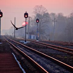 Куда уходят поезда...