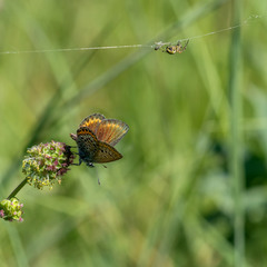 Про бабочку и паука