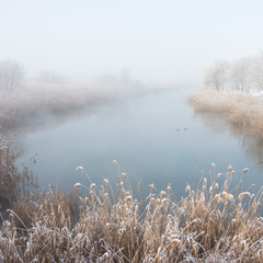 Туманные берега