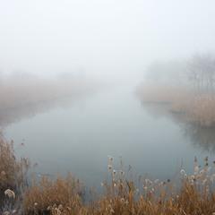 Кальчик в тумане
