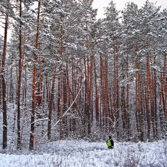 A man in winter forest