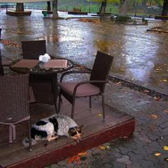 Бездомный дождь. Осенний пёс