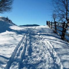 Синие тени января