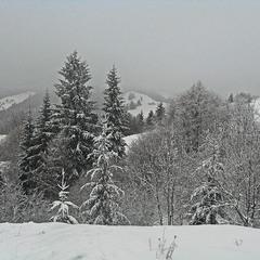 Ч/б зима