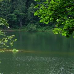 Зелен Синевир