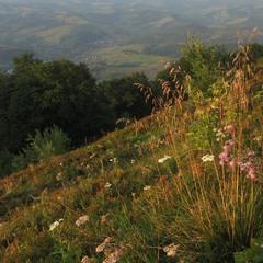 Вечірні трави полонин