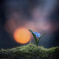 """""""Под лаской весеннего света"""""""
