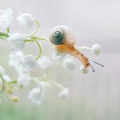 Полжизни за любовь весны