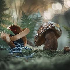"""""""Старый гриб"""""""