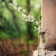 Там, за окном, весна...