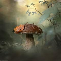 Идём, как в сказку, по грибы...