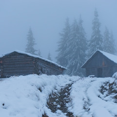 В ледяном тумане ..