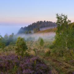 Туманное утро на холмах