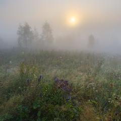 Туманным утром в предгорьях Карпат