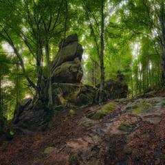 Мистический лес Тустани
