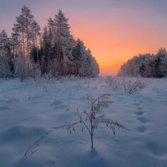Зимнее утро на опушке леса
