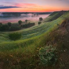soft dawn of July ..