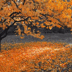 И листьев тихое шуршанье, ковром ложится на траву...