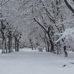 Снежный дизайн