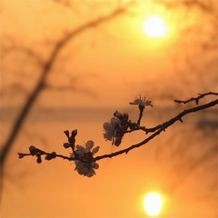 Цветение на закате