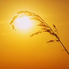 В солнечных лучах
