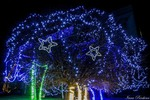 Звездное дерево