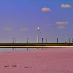 Розовые пляжи Сиваша